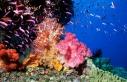 آیا تکنیکهای جذبِ گازکربنیک از جو میتوانند اقیانوسها را نجات دهند؟